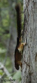 squirrel02-copy.jpg